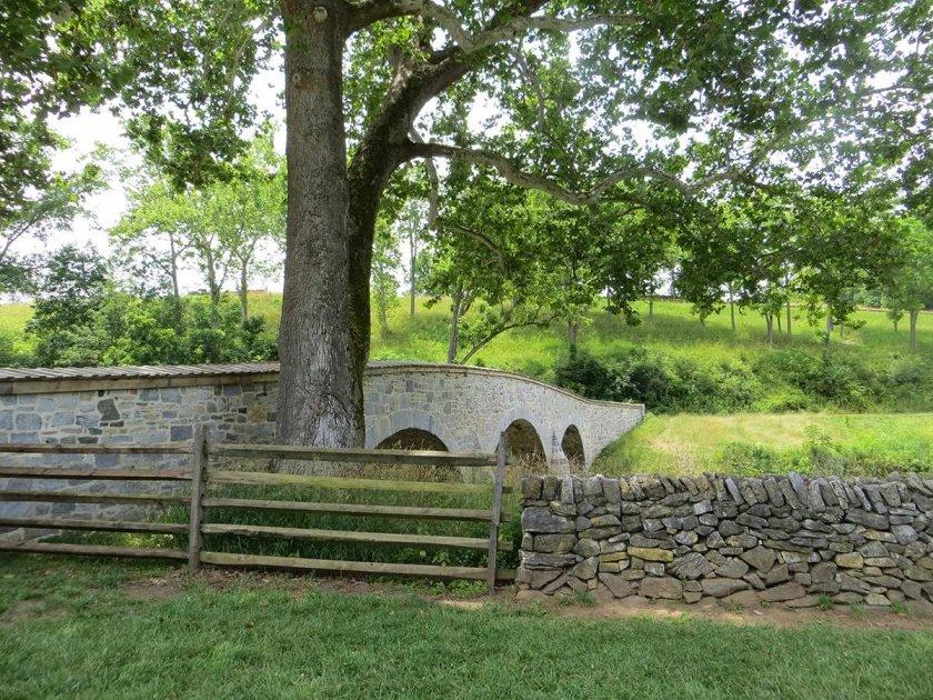 witness tree on east bank of creek